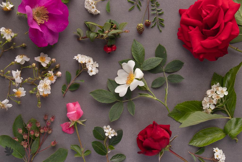 Pflanzenfamilien: Rosaceae (Rosengewächse)